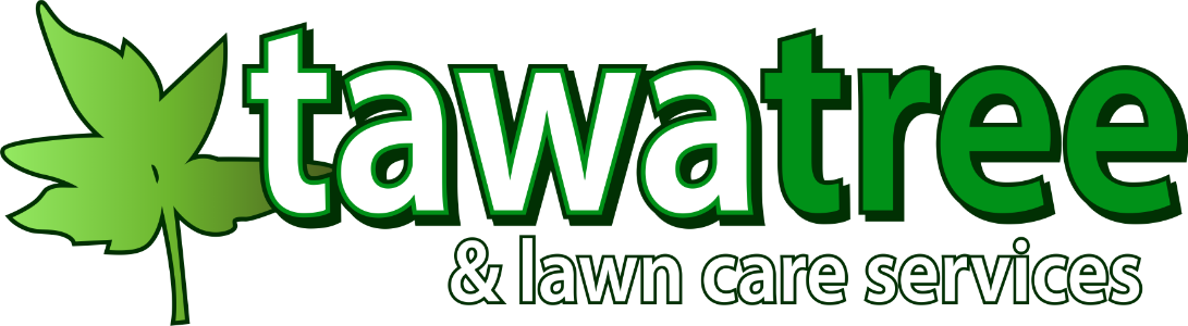 Tawa Tree Logo